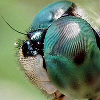 Pictures of Bugs: DragonFly Eye