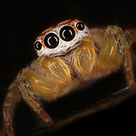 Pictures of Bugs: Garden Spider